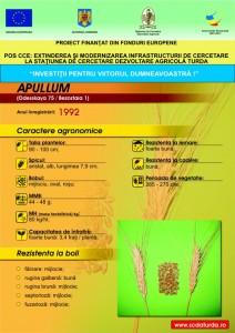 Apulum1