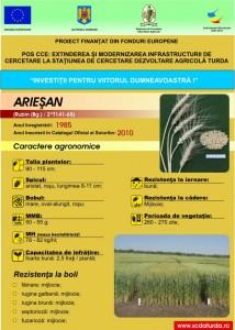 Ariesan1