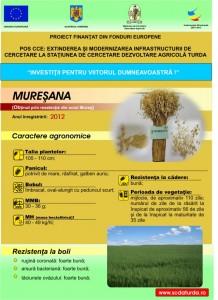 Muresana1