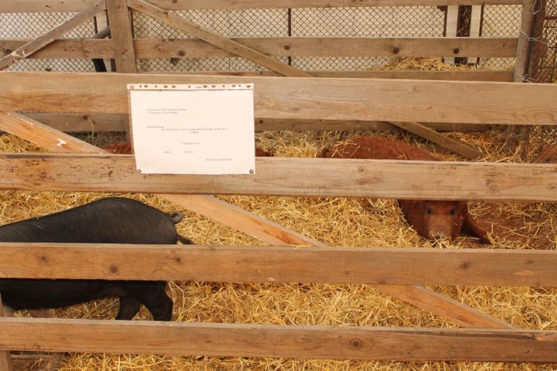 poze-agraria-02-05-2012-019