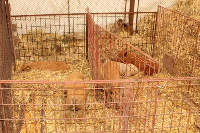 poze-agraria-02-05-2012-023
