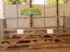 poze-agraria-02-05-2012-017