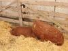 poze-agraria-02-05-2012-020