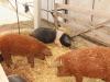 poze-agraria-02-05-2012-021