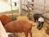 poze-agraria-02-05-2012-022