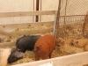 poze-agraria-02-05-2012-024