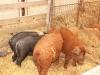 poze-agraria-02-05-2012-025