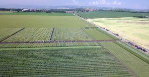Staţiunea de Cercetare Dezvoltare Agricolă Turda ,,Ziua Grâului, a Păinii şi Fertilizării  culturilor''
